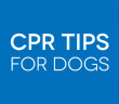 CPR-for-dogs-feat