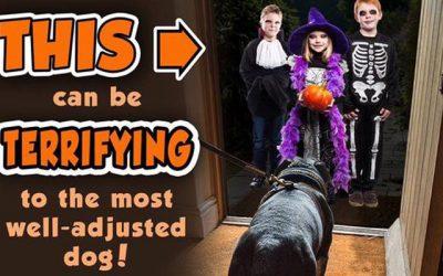 Halloween and Your Pug