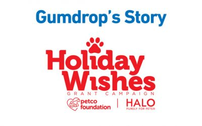 Petco Foundation & Halo, Purely for Pets – Holiday Wishes: Gumdrop's Story