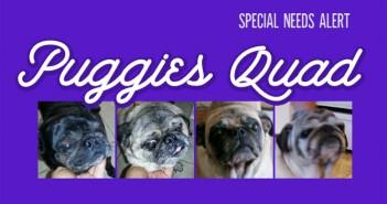 PuggiesQuad-Feature4