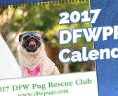 2017 DFW Pug Rescue Calendars Are Available Today!