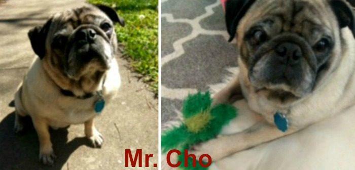 Mr. Cho 9-11 YO