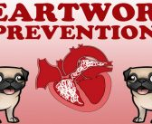 Heartworm Prevention Awareness