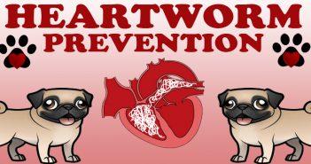 Heartworm Prevention Awareness