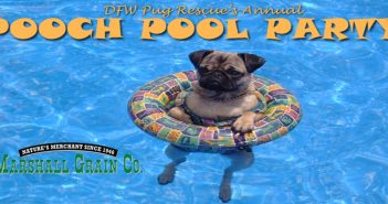 Pooch Pool Party – July 15th 2017