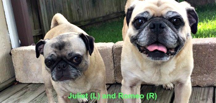 Juliet 13 YO and Romeo 13 YO