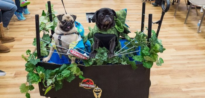 Pug-O-Ween Pictures