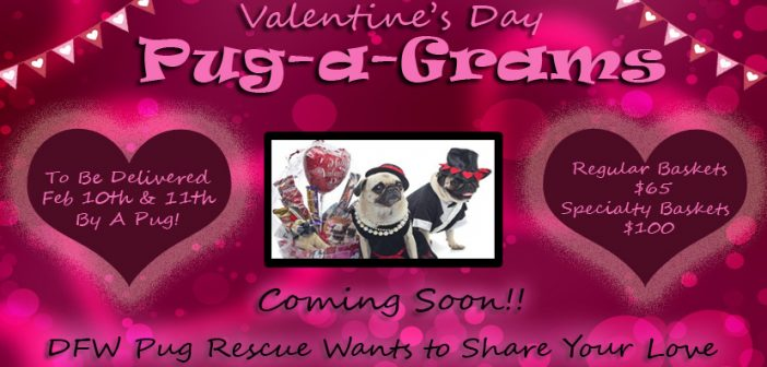 Pug-a-Grams: Coming Soon!
