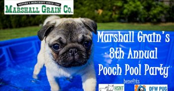 Marshall Grain's 8th Annual Pooch Pool Party – July 21st 2018