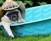 Marshall Grain's 9th Annual Pooch Pool Party – 7.20.19