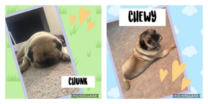 Chunk 14 YO and Chewy 13 YO